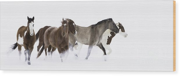Cowboys Wood Print featuring the photograph Snowy March II by Carol Walker