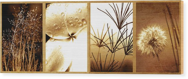Floral Wood Print featuring the photograph Nature's Window by Holly Kempe