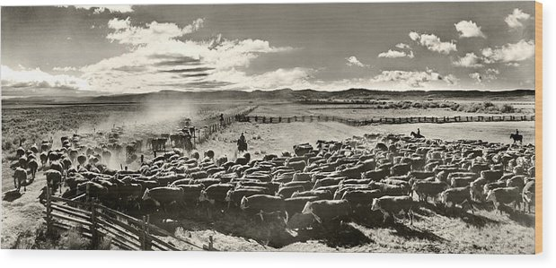 Cattle Wood Print featuring the photograph Cattle Drive by Unknown
