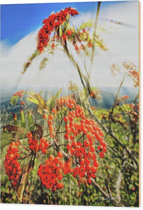 Mountain Ash Wood Print featuring the photograph Mountain Ash Sunshine by David A Lane