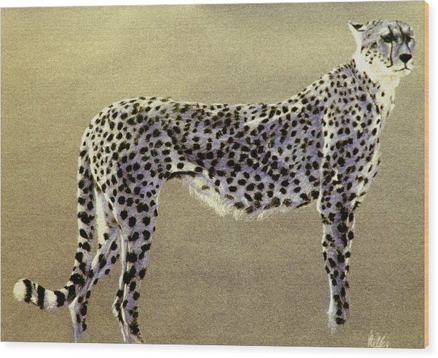 Wildlife Wood Print featuring the drawing Cheetah by Paul Miller