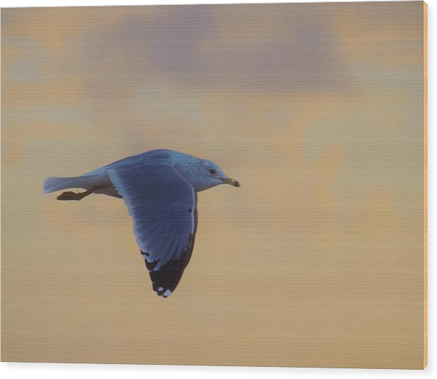 America Wood Print featuring the photograph Simply Flying by E Luiza Picciano
