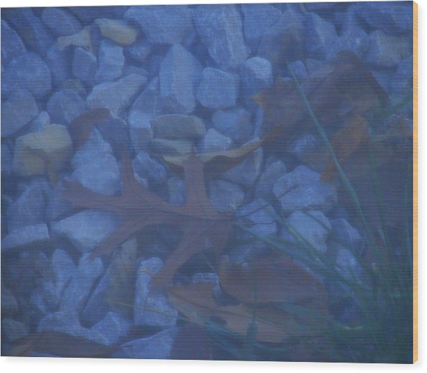 Wood Print featuring the photograph Blue Leaf by Luciana Seymour