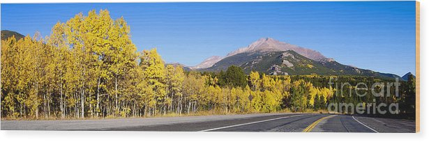 Aspens Wood Print featuring the photograph Aspen Highway7 by Sean Brubaker