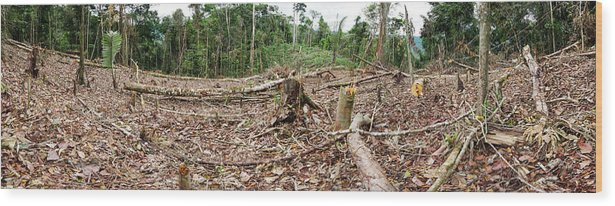 Agriculture Wood Print featuring the photograph Rainforest Cleared To Plant Crop by Dr Morley Read