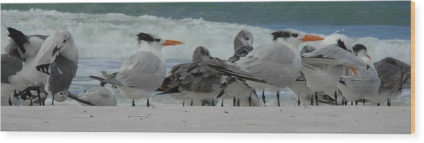 Birds Wood Print featuring the photograph Party At The Beach by Amanda Vouglas