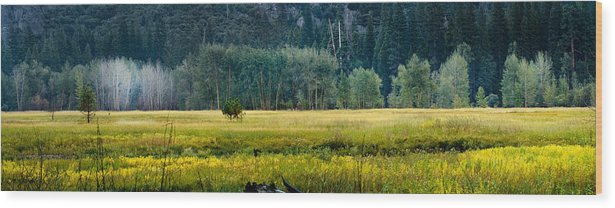 Panoramas Wood Print featuring the photograph Golden Meadow by Joe Darin