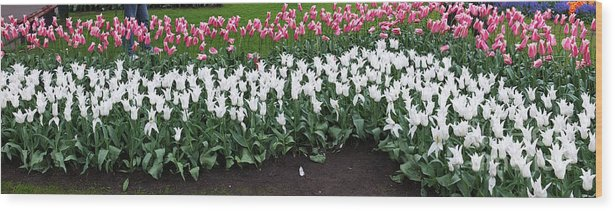 Keukenhof Gardens Wood Print featuring the photograph Keukenhof Gardens 8 by Mike Nellums
