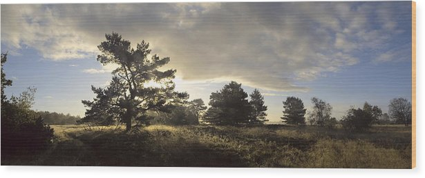 Denmark Wood Print featuring the photograph The Old Heath by Wedigo Ferchland