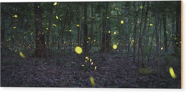 Congaree Fireflies by Tracy Martin