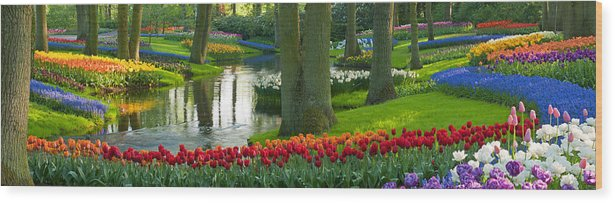 Scenics Wood Print featuring the photograph Spring Flowers In A Park by Jacobh