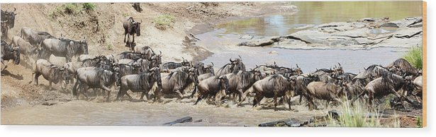 Scenics Wood Print featuring the photograph Migration, Group Of Gnus Crossing Mara by Brittak