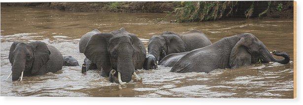Kenya Wood Print featuring the photograph African Elephants Having A Bath In Mara by Manoj Shah