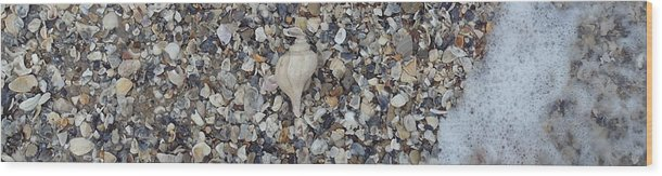 Conch Wood Print featuring the photograph Conch Among A Sea Of Shells by Robert Scarborough