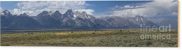 Grand Tetons Wood Print featuring the photograph Bisons Grazing Under The Grand Tetons by Witt Lacy