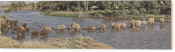 Elephants Crossing River Single File Africa Kenya Wood Print featuring the photograph Elephant Crossing by Wendy White