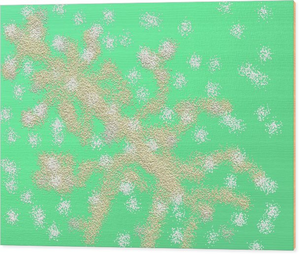 Digital Art Wood Print featuring the painting Snow Tree by Naomi Jacobs