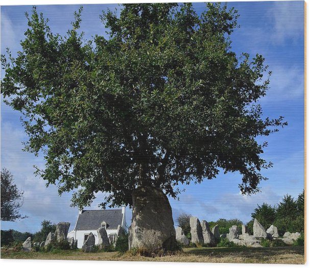 Menhirs Wood Print featuring the photograph Stone tree by Patrick Pestre