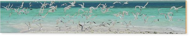 Scenics Wood Print featuring the photograph Flock Of Seagulls By Azure Beach by Christopher Leggett