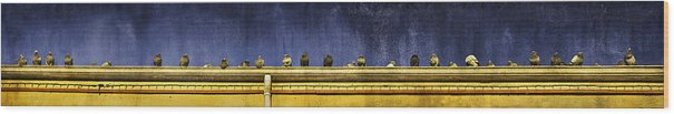 Granville Island Wood Print featuring the photograph Pigeons On Yellow Roof by Peter v Quenter