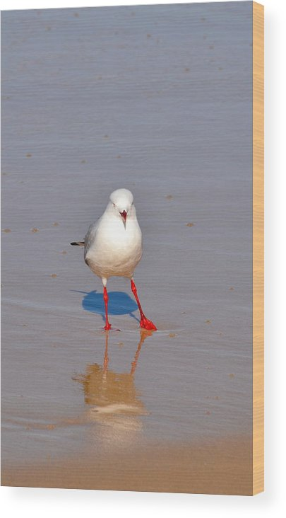 Seagull Wood Print featuring the photograph And A One Two Three by Naturae Sua