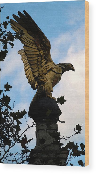 Golden Eagle Wood Print featuring the photograph Eagle by John Bradburn