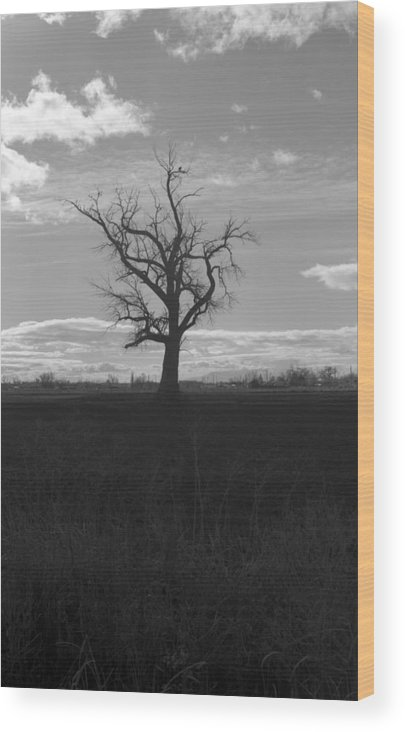 Farm Wood Print featuring the photograph No Nest by Michael Cronen
