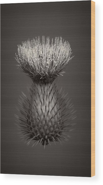 Weeds Wood Print featuring the photograph Thistle 3 by Simone Ochrym