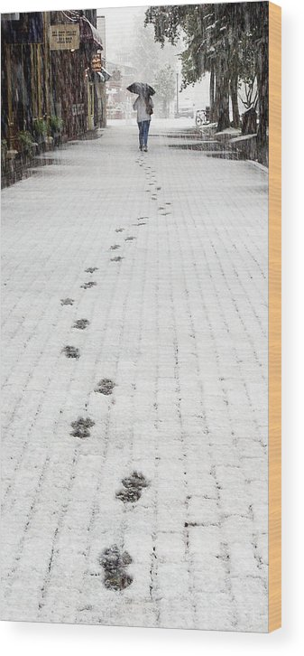 Footprints Wood Print featuring the photograph Fresh Tracks by Paul Conrad