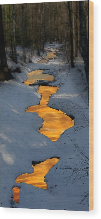 Winter Wood Print featuring the photograph Snow Bound by Robert Bissett