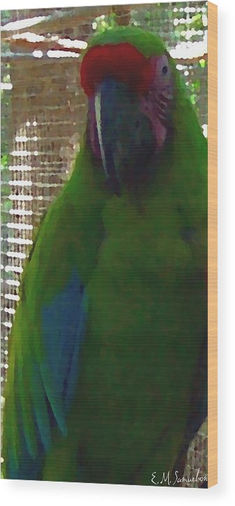 Parrot Wood Print featuring the photograph Green Parrot by Elise Samuelson