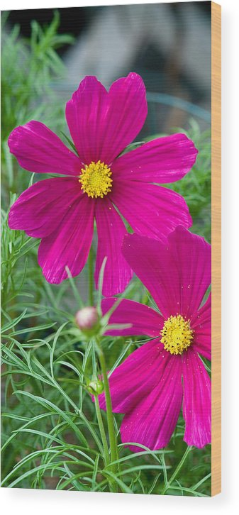 Pink Wood Print featuring the photograph Pink Flower by Michael Bessler