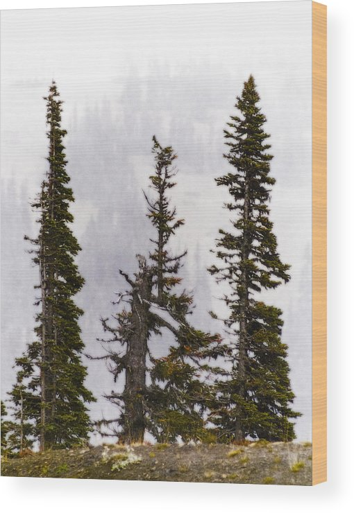 Washington State Wood Print featuring the photograph 3 Amigos by Greg Reed
