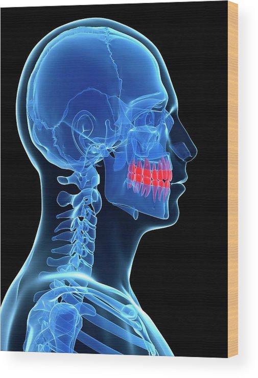 Artwork Wood Print featuring the photograph Human Teeth by Sebastian Kaulitzki