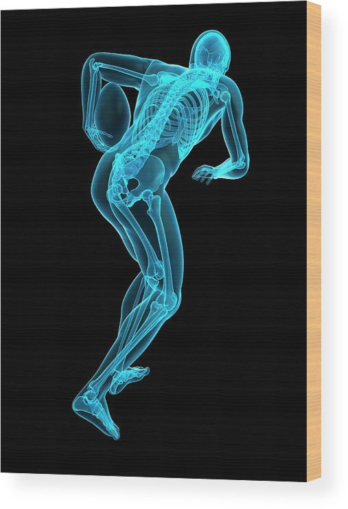 Artwork Wood Print featuring the photograph Skeletal Structure Of Rugby Player by Sebastian Kaulitzki/science Photo Library