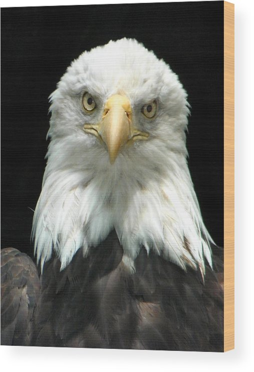 Eagle Wood Print featuring the photograph American Bald Eagle 2 by Tina Barrett