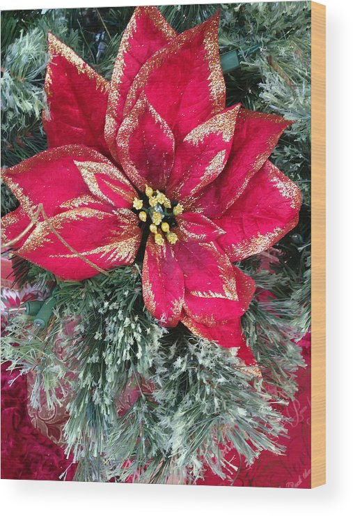 Christmas Wood Print featuring the photograph Christmas Poinsettia by Aimee L Maher ALM GALLERY