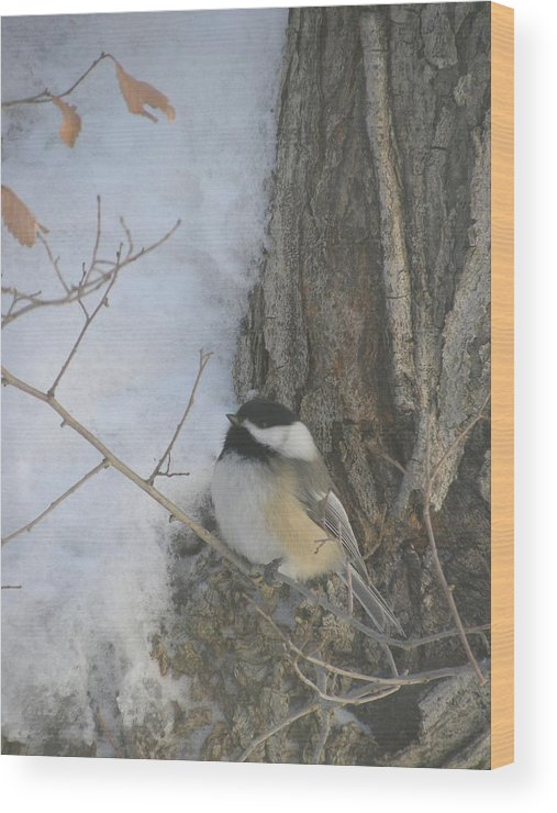 Winter Wood Print featuring the photograph Cickadee And Bark by Peggy McDonald