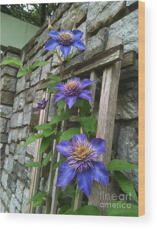 Flowers Climbing High Wood Print featuring the photograph Climbing High by Valerie Brown