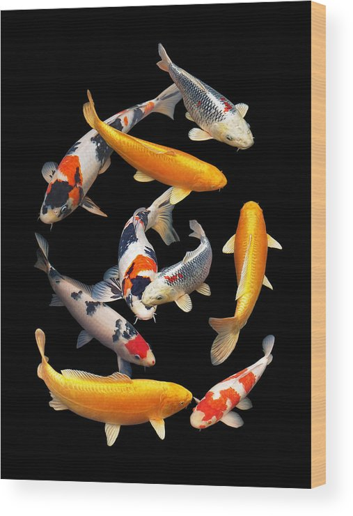 Fish Wood Print featuring the photograph Colorful Japanese Koi Vertical by Gill Billington
