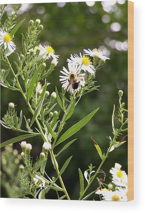 Bee Wood Print featuring the photograph Fleabane Bee by David Addams