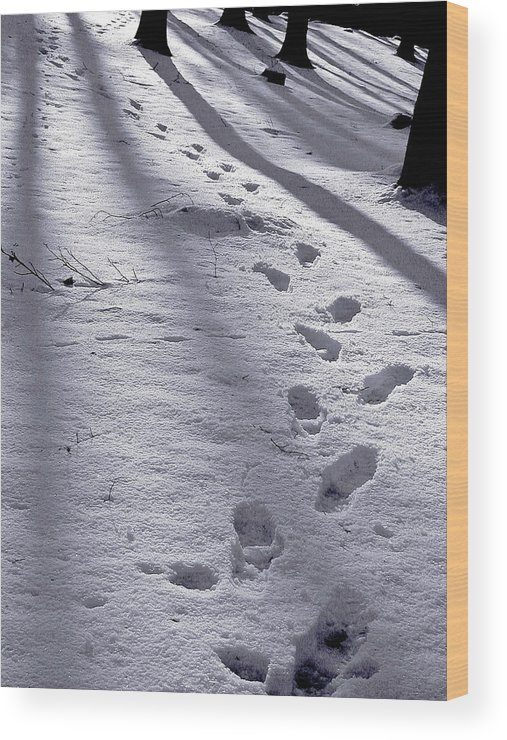 Footstep Wood Print featuring the photograph Foot Steps In The Snow In A Forest In Denmark by Jean Schweitzer