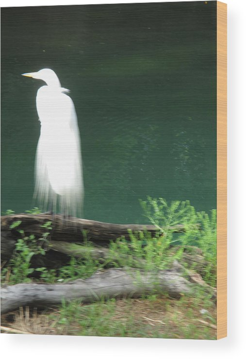 Water Wood Print featuring the photograph Ghost Bird by Eric Baierl