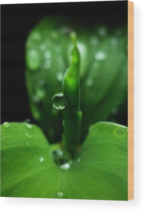 Tags: Leaf Wood Print featuring the photograph Green-dew by Rosvin Des Bouillons