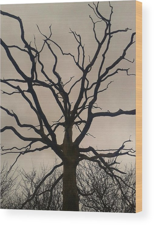 Tree Wood Print featuring the photograph Harsh Winter by Gav