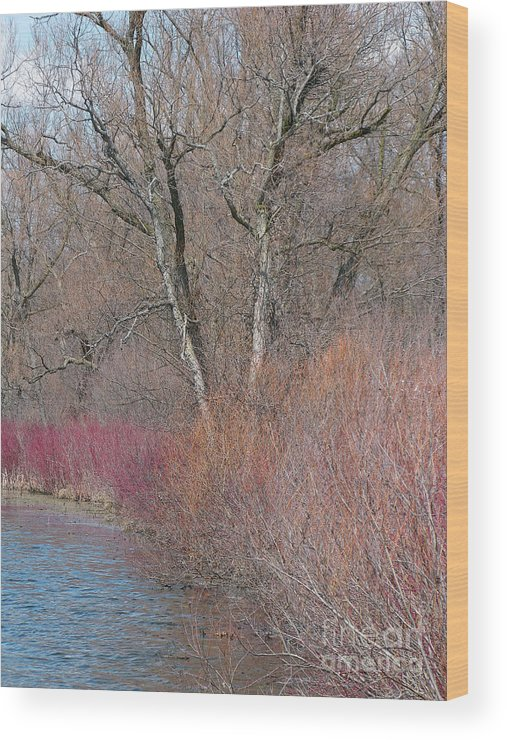 Spring Wood Print featuring the photograph Hint Of Spring by Ann Horn