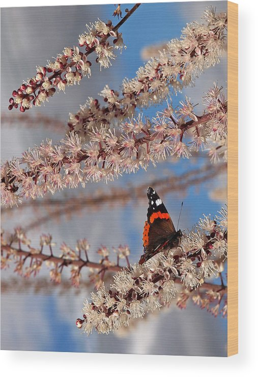 Butterfly Wood Print featuring the photograph Irresistible Blossom by Gill Billington