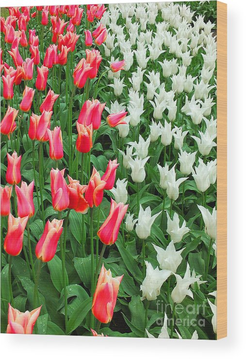 Keukenhof Gardens Wood Print featuring the photograph Keukenhof Gardens 7 by Mike Nellums