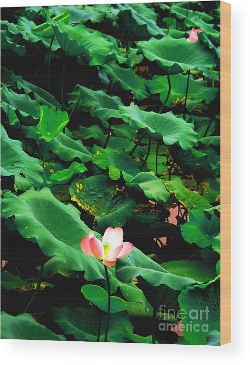 Nature Wood Print featuring the photograph Lotus by PlusO FineArt