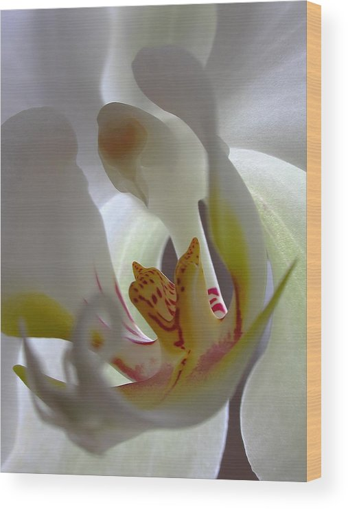 Orchid Wood Print featuring the photograph Luminous Orchid by Juergen Roth